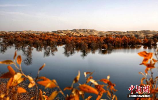 新疆尉犁县葫芦岛深秋景色美不胜收
