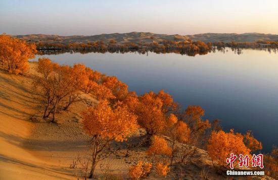 深秋时节,新疆尉犁县葫芦岛景区内沙丘连绵起伏,湖水湛然清澈,湖畔边、湖水中、沙包上的胡杨在秋阳的照耀下镶上耀眼的金边,景色迷人,美不胜收。游客或漫步沙丘,或荡船碧波,尽览秋季美景。新疆尉犁县位于塔里木河中下游、塔克拉玛干沙漠北缘,境内分布约80万亩胡杨林。赵伟铭 摄